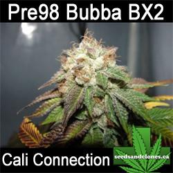 Pre 98 Bubba BX2 Seeds