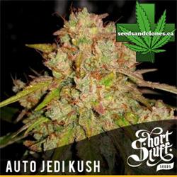 Jedi Kush Seeds