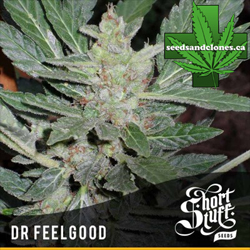 Dr. Feelgood Seeds