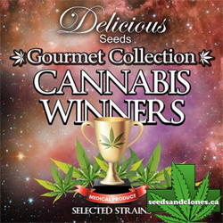 Gourmet Collection 2 Seeds