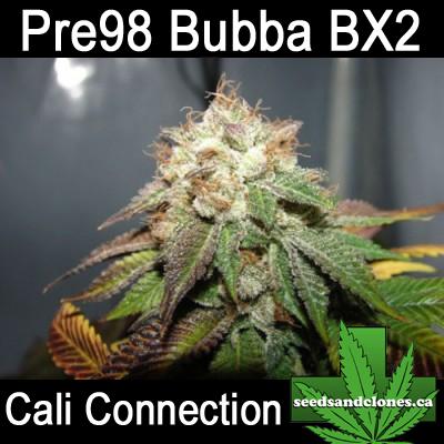 Pre 98 Bubba Seeds