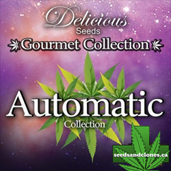Gourmet Automatic #1 Seeds