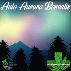 Auto Aurora Borealis Seeds