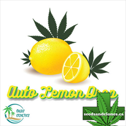 Auto Lemon Drop Seeds