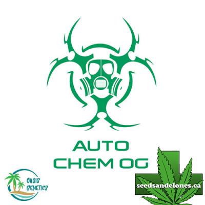 Auto Chem OG Seeds