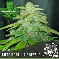 Auto Gorilla Shizzle Seeds