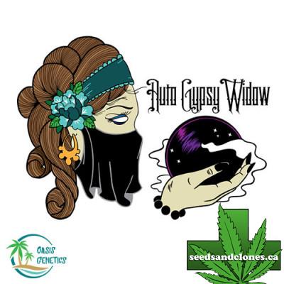 Auto Gypsy Widow Seeds