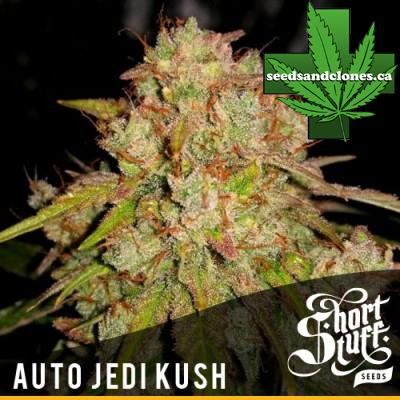 Auto Jedi Kush Seeds