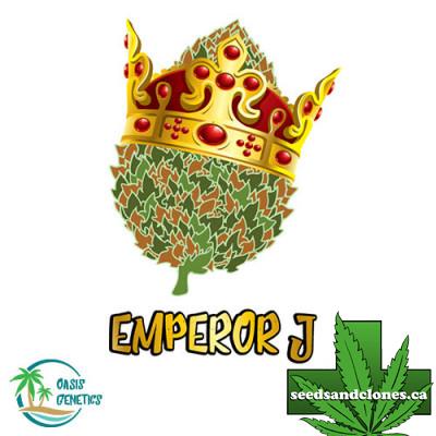 Auto Emperor J Seeds