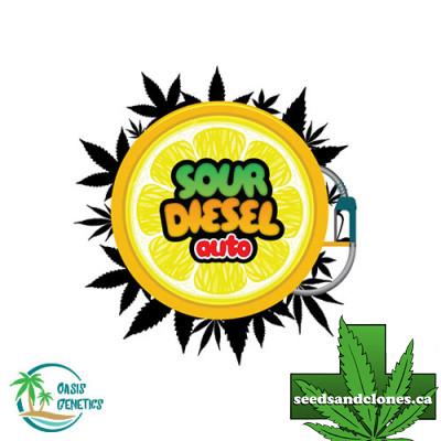 Auto Sour Diesel Seeds