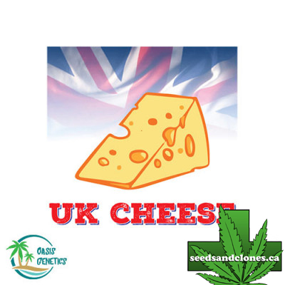 Auto UK Cheese Seeds