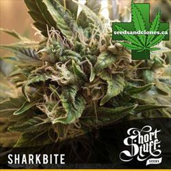 Auto Sharkbite Seeds