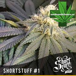Shortstuff #1 Seeds
