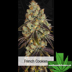 French Cookies Seeds