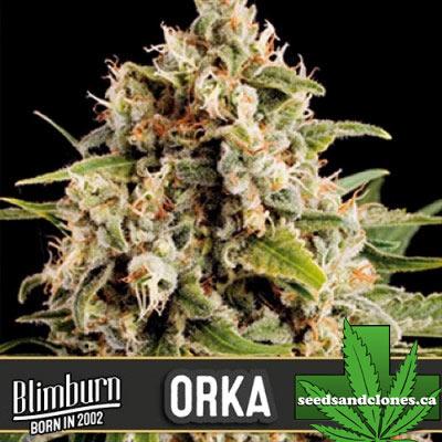 Orka Seeds