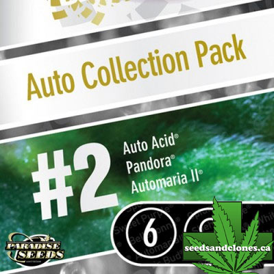 Auto Collection #2 Seeds